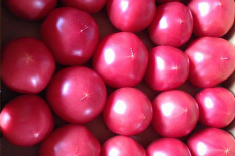最高のトマト