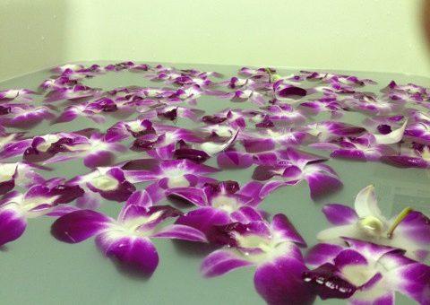 ◆夢のお花の