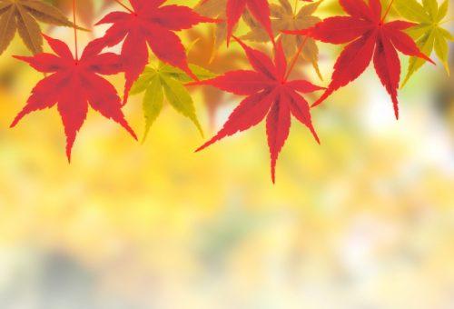 「里の秋」 MINEHAHA