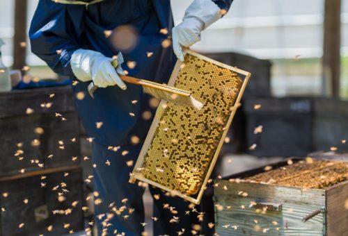 ミツバチがいなくなったらどうなる!?蜂群崩壊症候群