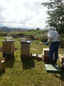 強い蜜蜂を育てる養蜂