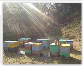 どんな環境で育った蜂か
